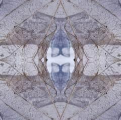 yndra bluebud four