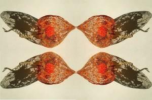visulogik bird kiss