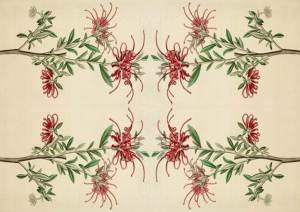 scarlet grevillea