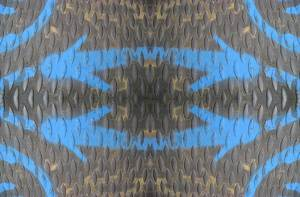 daffy bluets