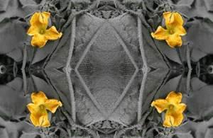 ashflower